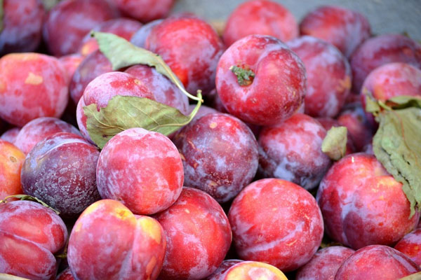 prune_rouge_red_plums_delivery_lebanon