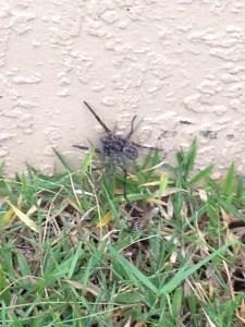 Itsy Bitsy Spider....