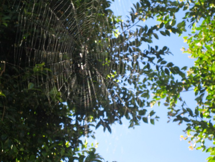 Web in the Sun