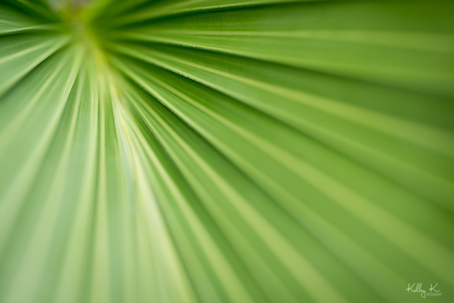 Fine art macro image of green palm frond