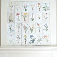Botanical Prints to Download