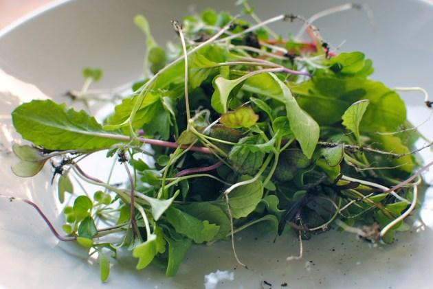 salad leaf 'thinnings'