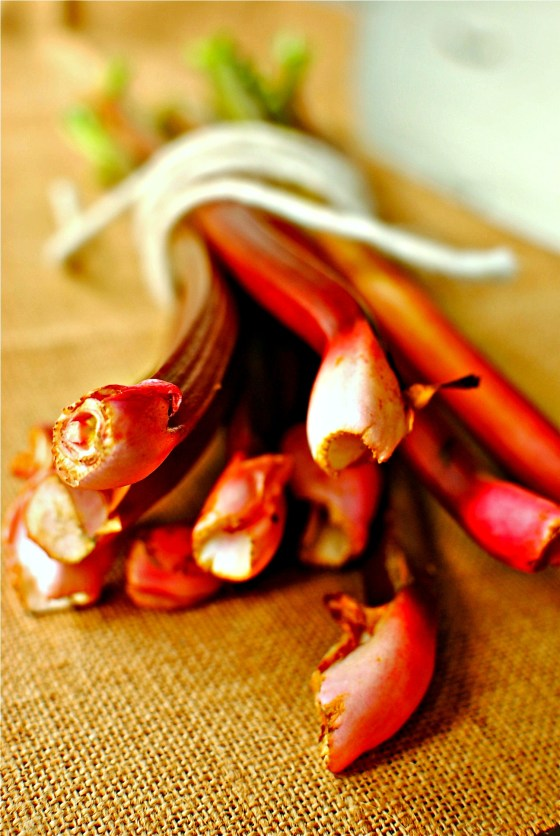 rhubarb bundle