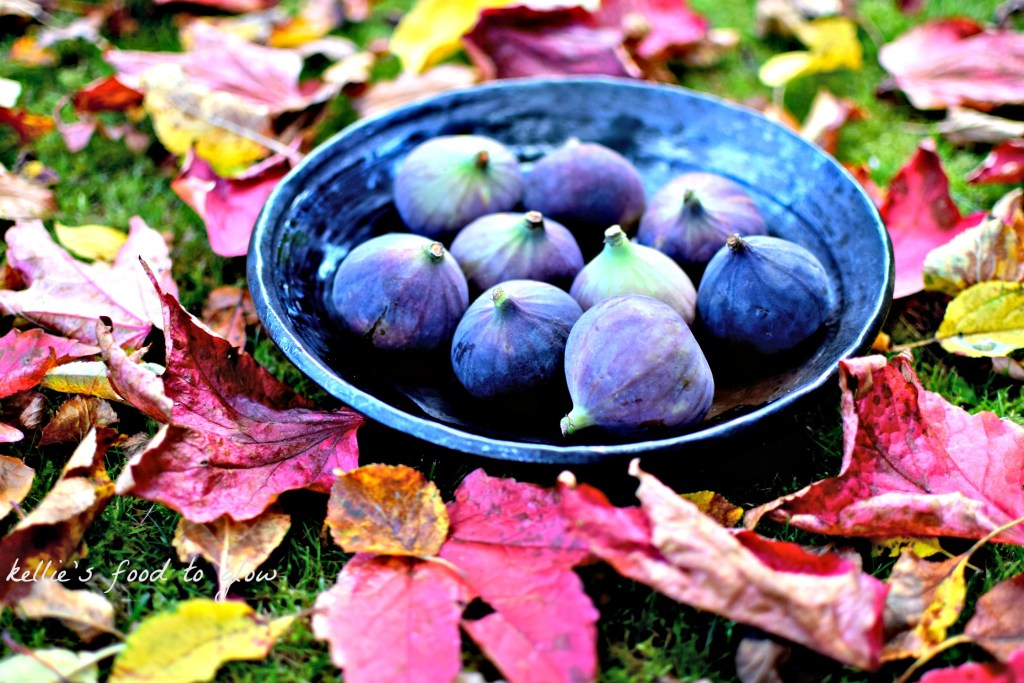autumn figs