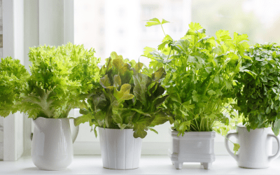 5 Ways to Grow Your Own Food