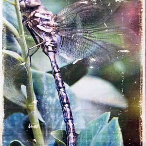Wall Decor of Dragonfly on a pea plant