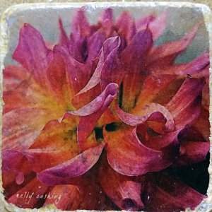 Pink Dahlia 1 Coaster