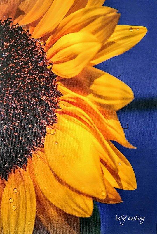 Half Sunflower on Canvas by Kelly Cushing