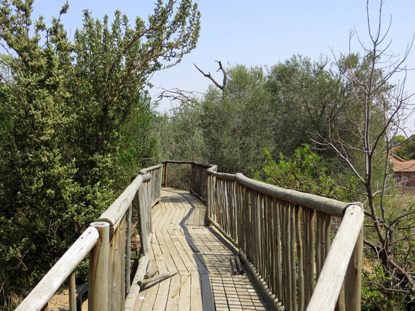 Walkway to the bird hide