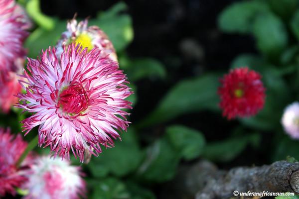 Unidentified flower 3
