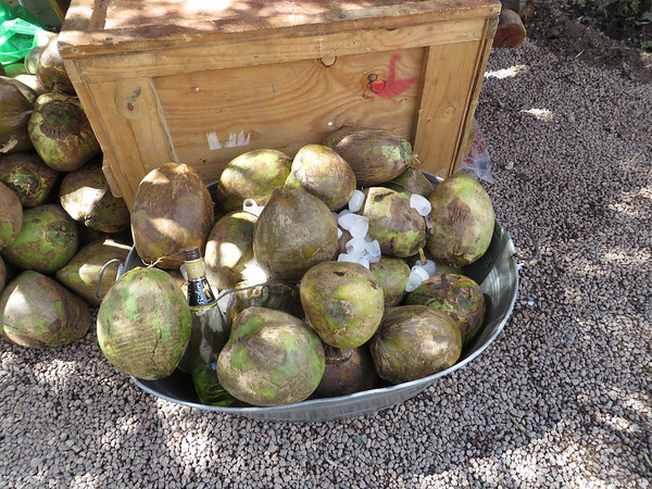 Fresh Coconuts for Drinks