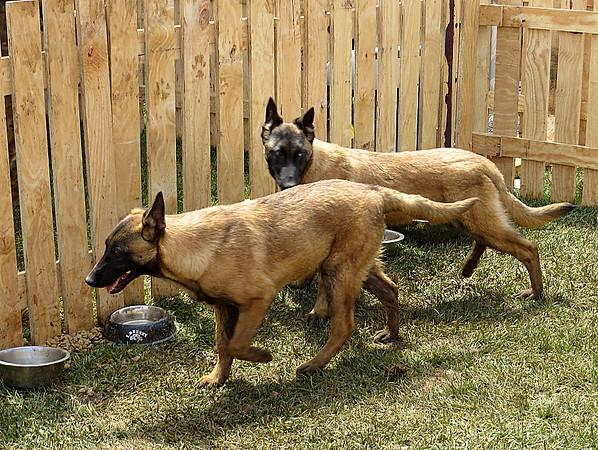 Paramount Group Canine Unit