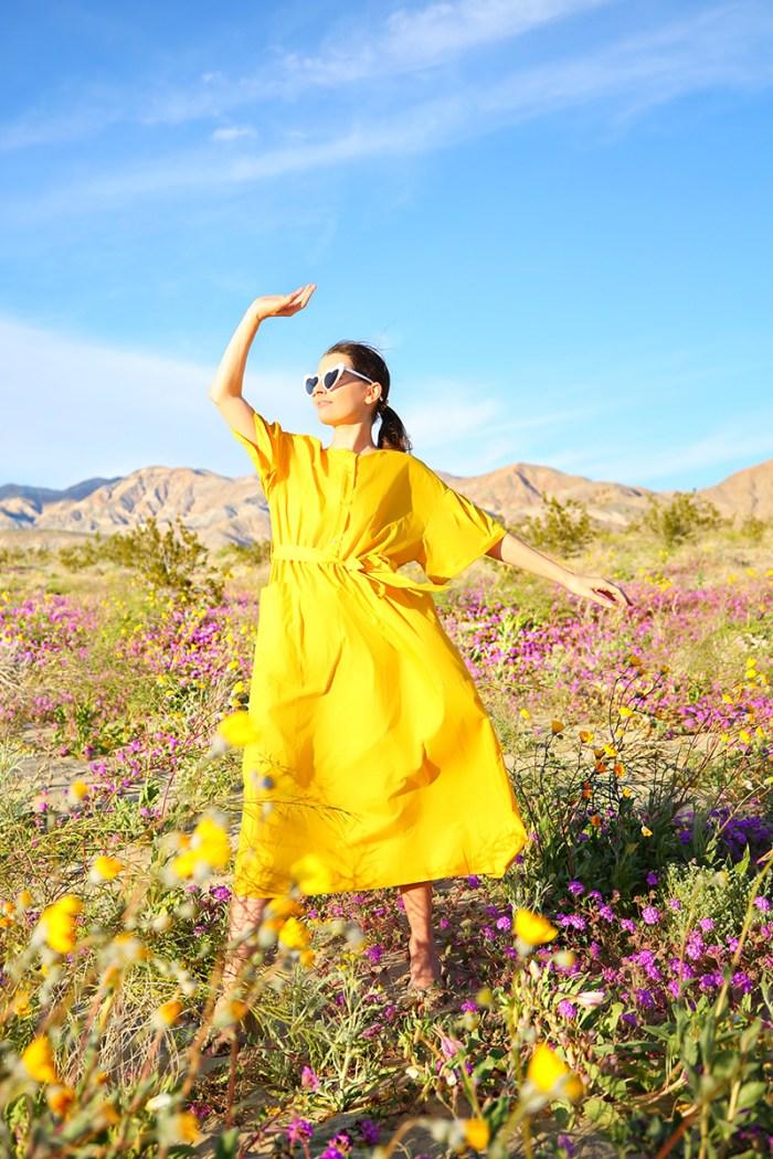 Anza Borrego Super Bloom   Kelly Golightly