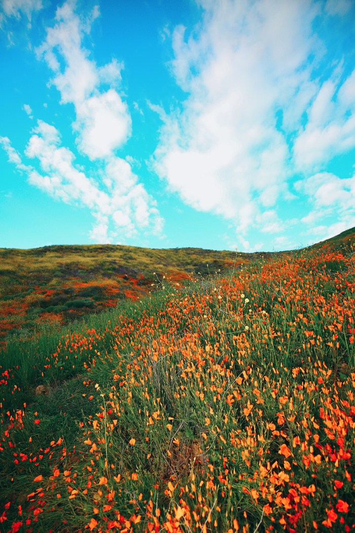 Super Bloom Walker Canyon | Kelly Golightly