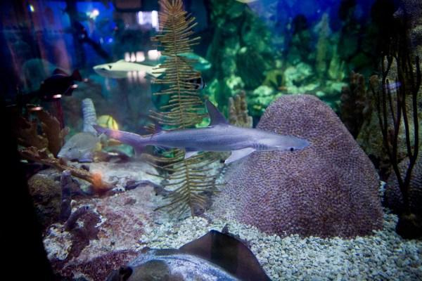 Mitch & Family Visit Chicago' Shedd Aquarium - Kelly In