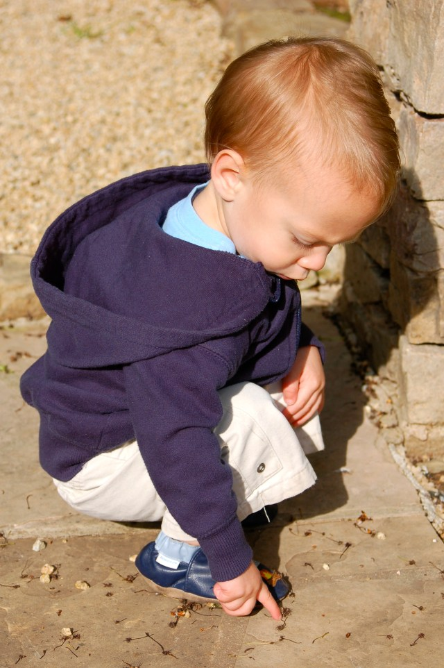 Judah Looking for Bugs