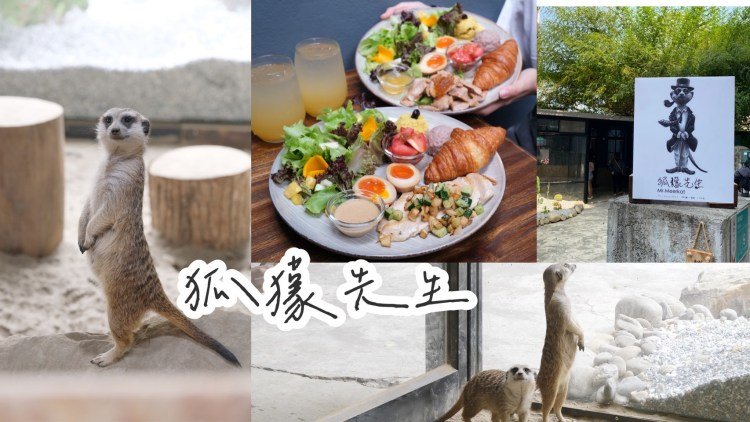 【台南早午餐】爆炸可愛『狐獴先生 Mr.Meerkat』市區也能看到超萌狐獴,早午餐不錯吃,就在東洲黑糖後方!