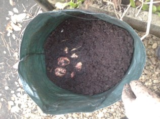 grow bag potato harvesting gardening self sufficiency