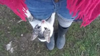 Kitten climbing leg farm visit Spain