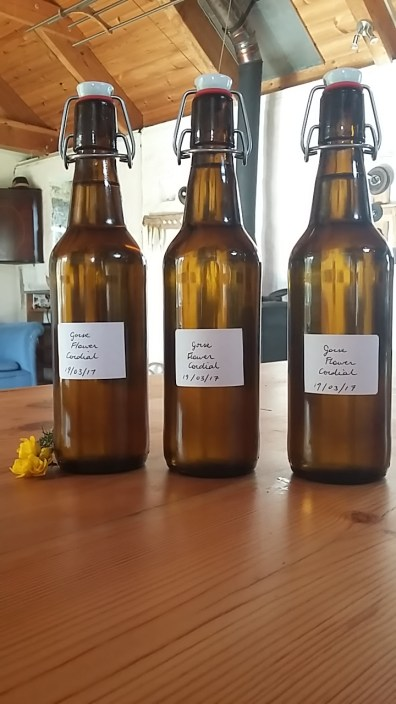 How to make coconut scented gorse flower cordial