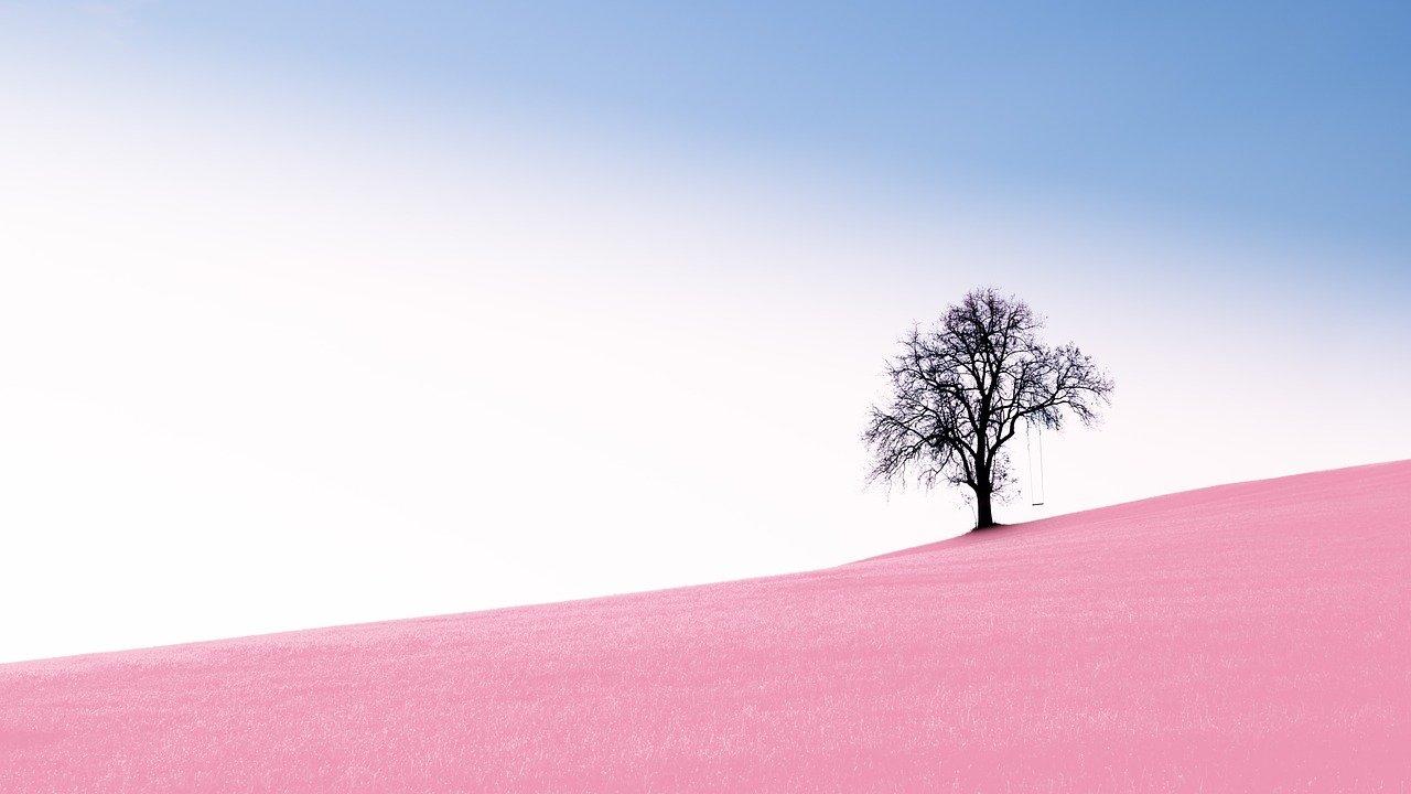 single alone tree