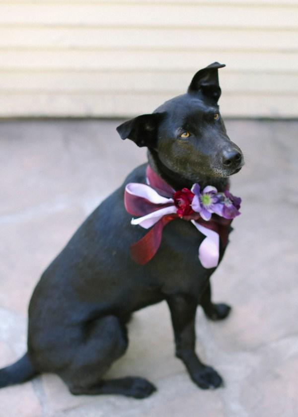 Beribboned Doggy Ring Bearer Ideas Los Angeles Prop Stylist