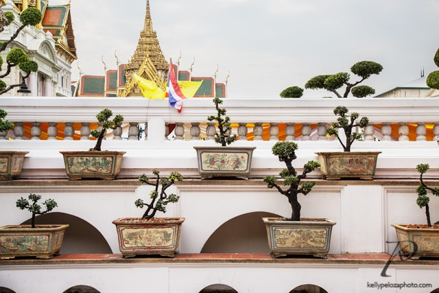 bonsai-trees-grand-palace-bangkok
