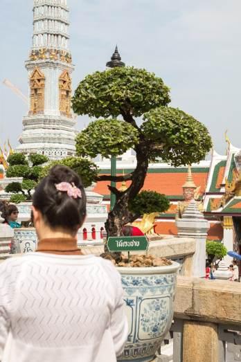 bangkok-woman-trees