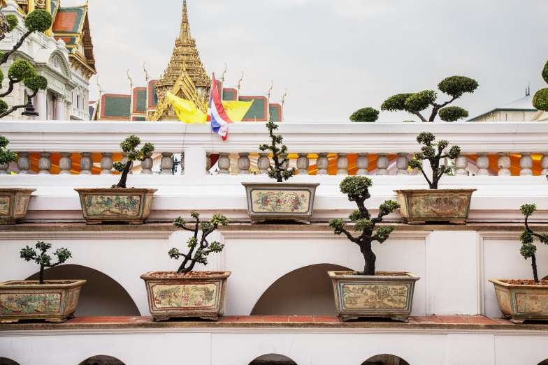 thailand-bonsai-trees