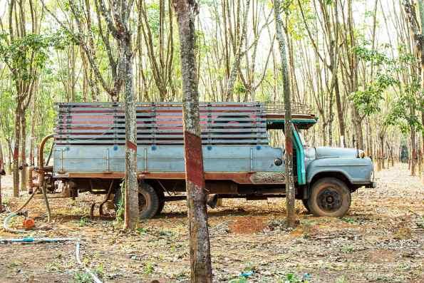thailand-rubber-trees-kelly-peloza