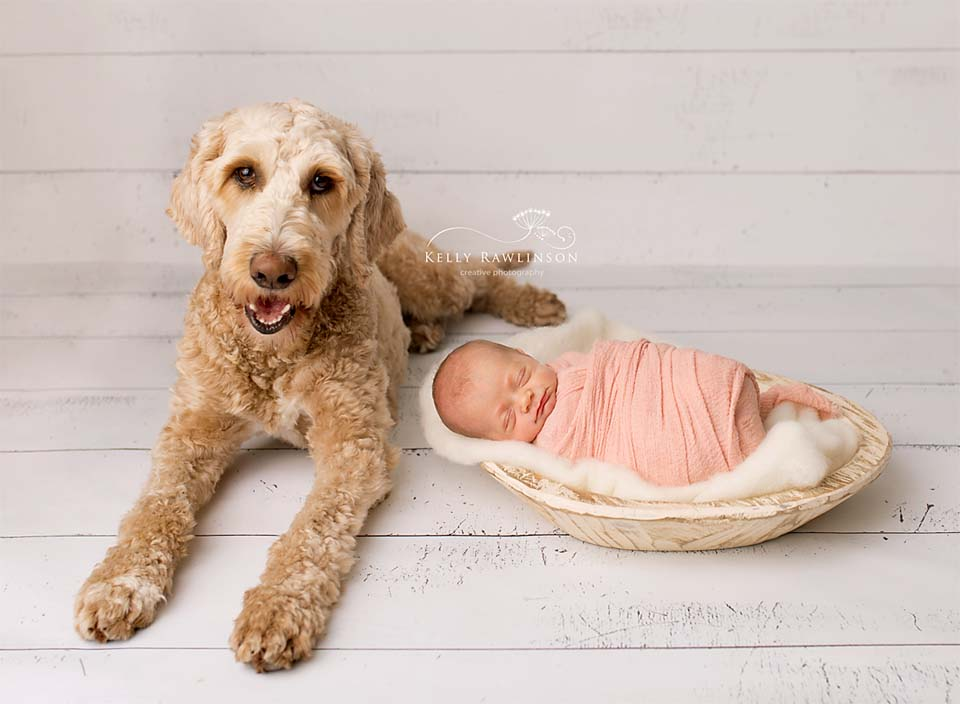 Newborn and Golden Doodle