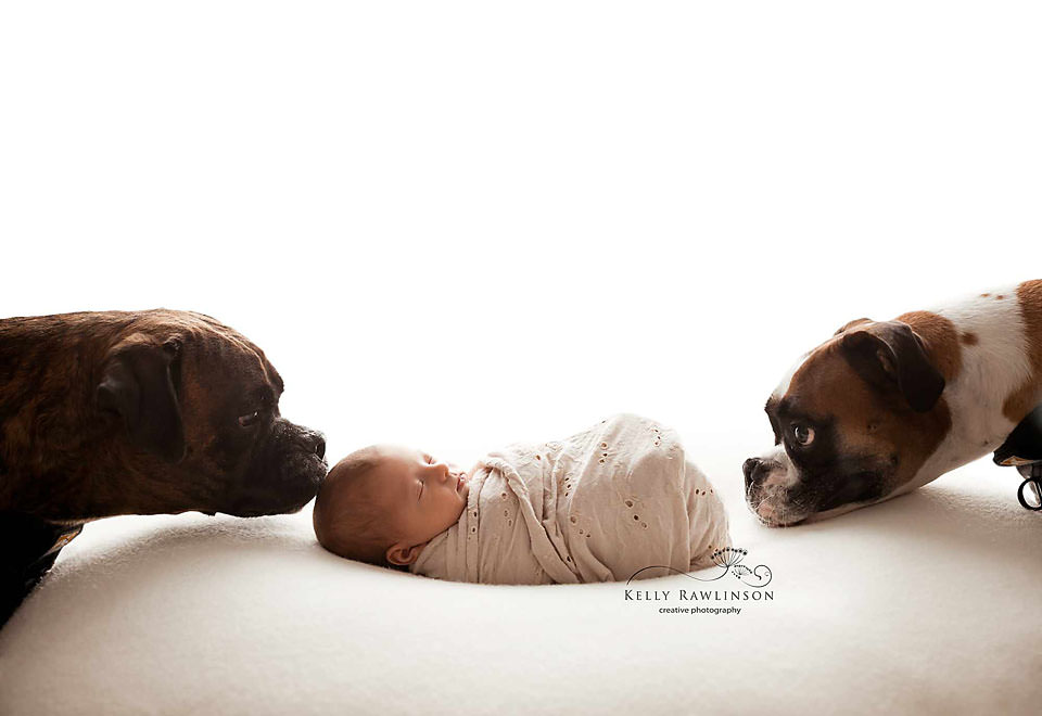 Boxers with new baby