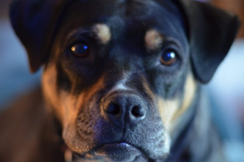 A Bright Minded Change For Your Senior Dog