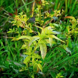 Unmissable Ways To Say Goodbye To Weeds For Good