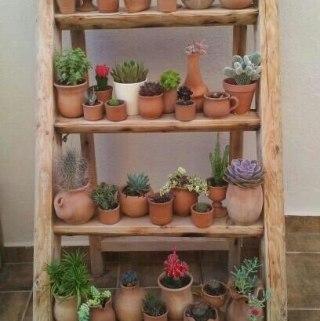 DIY Succulent Garden for Small Apartments