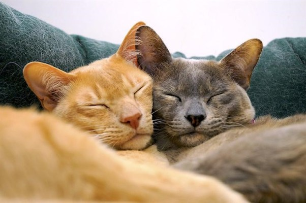 """""""Pet Protection"""" - 6 Ways To Take Care of Your Feline Friend While Overseas"""