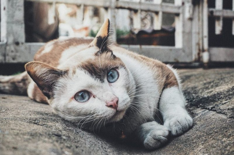 5 Ways to Keep Your Cat Healthy and Happy While On Vacation
