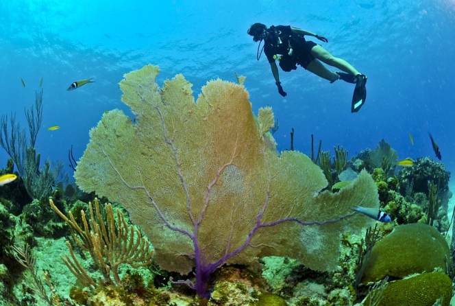 ocean natural beauty