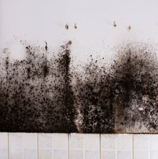 What is Black Mold and How Dangerous Is It to My Family?