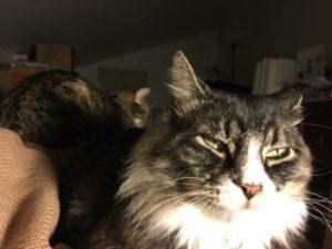 Marlowe the cat