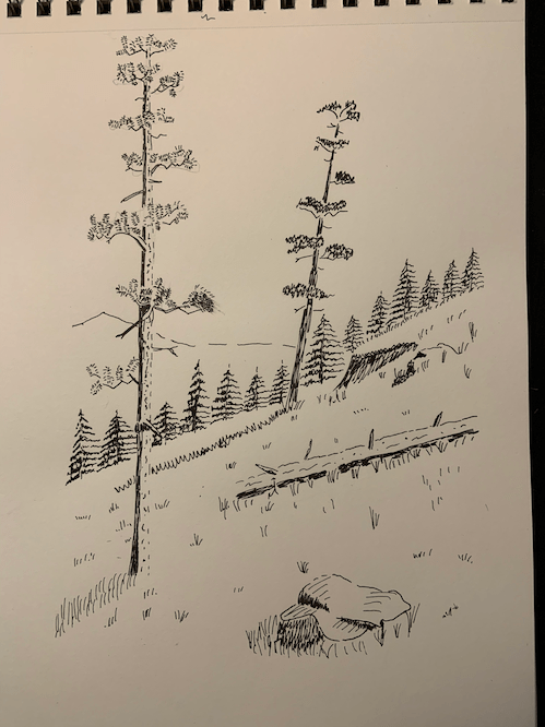 Drawing of trees on a hill