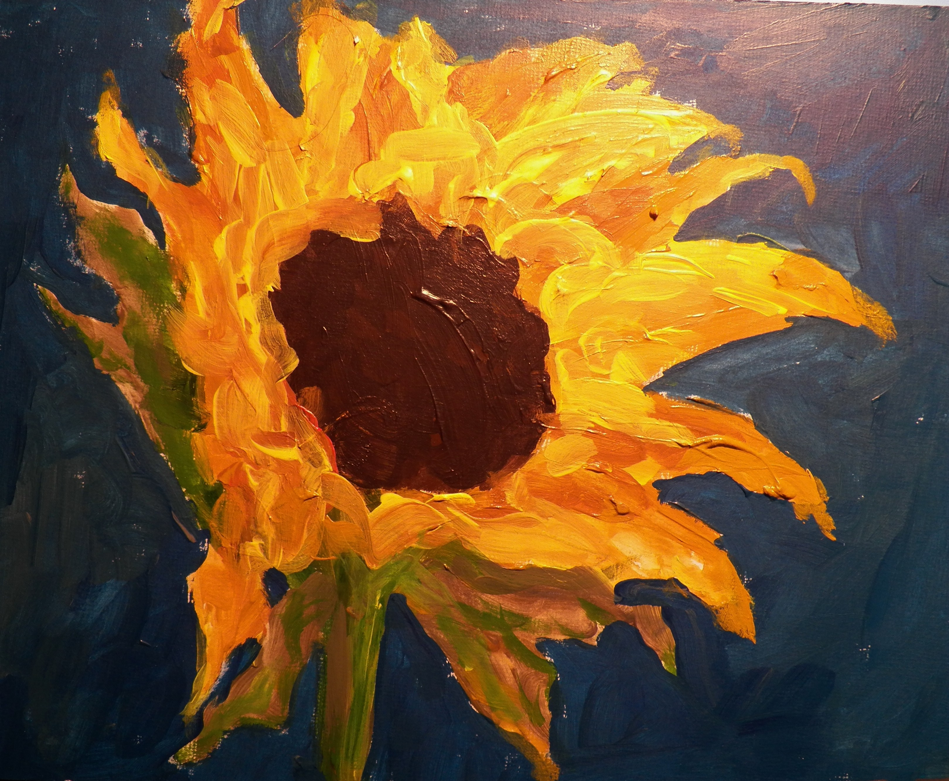 southerlands sunflower a place