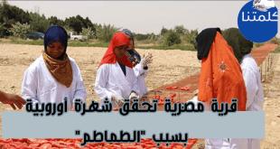 الطماطم المجففة المصرية