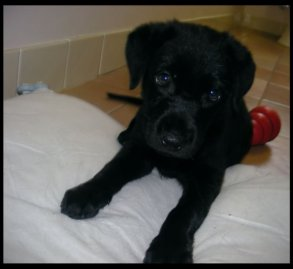 Missy as a pup