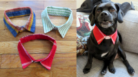 DIY Doggie Dress Shirt Collar  The Cheerful Times