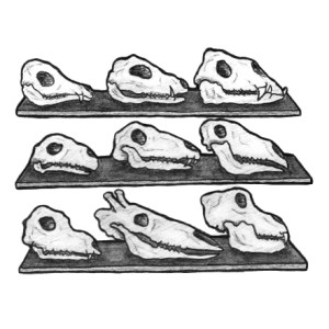 Spot Illustration Close Up- Tabulations, Evolutions, Sex Drive