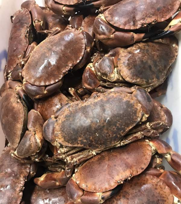 Male large crabs