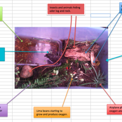 Hissing Cockroach Diagram Videx Door Entry Phone Wiring Annotated - Science