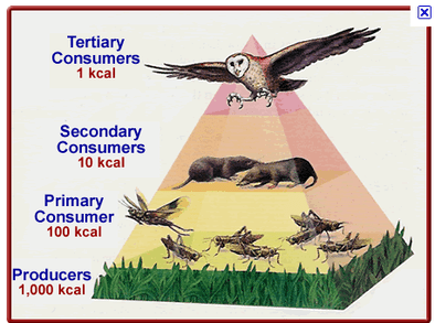 animal cloning diagram 2005 ford expedition fuse panel ecology pyramid - science