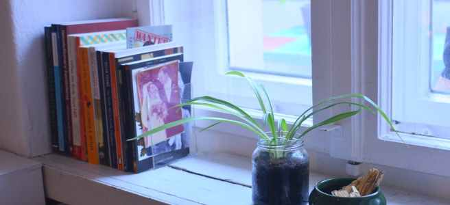 potted plant with books on windowsill